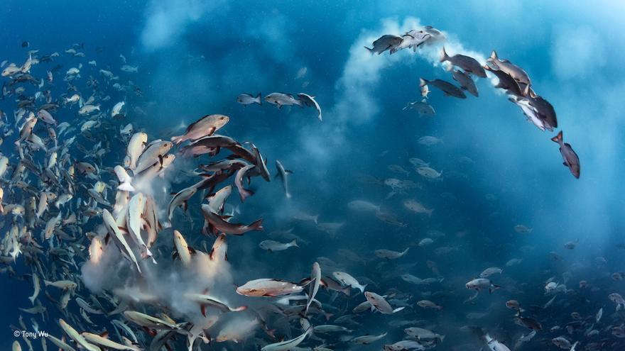 C:\fakepath\© Tony Wu_Wildlife Photographer of the Year- Under Water winner.jpg