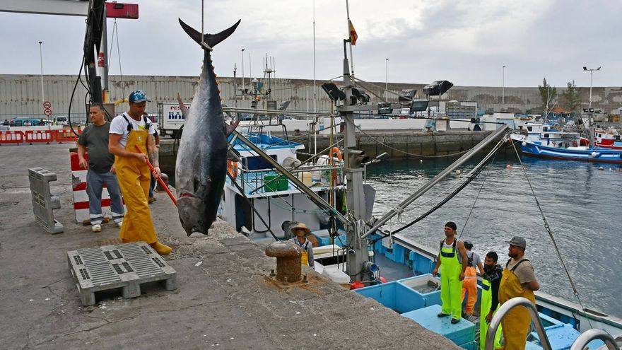 Descarga de atún rojo en el puerto de Mogán, en Gran Canaria