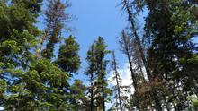 El Gobierno y el Instituto Pirenaico de Ecología investigan la respuesta de los bosques ante el cambio climático