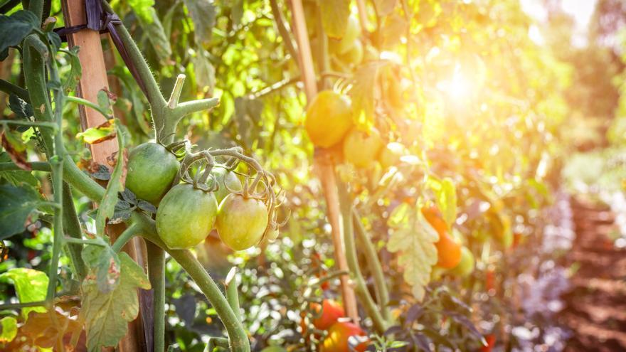 Agricultores Almerienses Denuncian La Venta De Frutas Y
