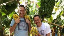 Los chefs hermanos Torres, este martes en una finca de plátano del Valle de La Orotava, isla de Tenerife