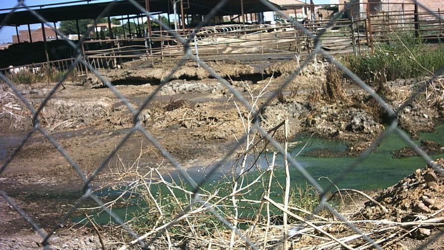 Desestiman un recurso del vaquero de Fuente Palmera por supuestos daños sufridos en 2010