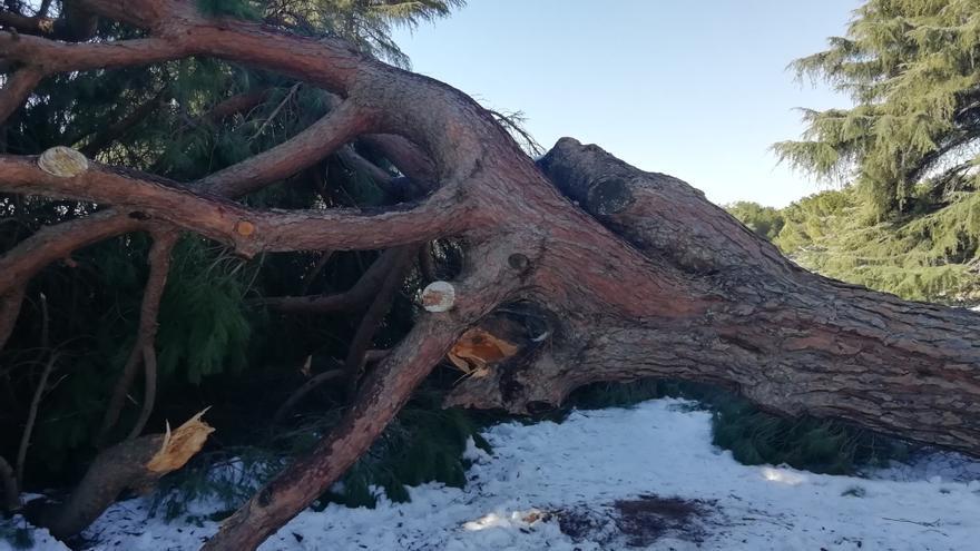 El colapso del pinar de la Dehesa de la Villa: una catástrofe que podría encerrar una oportunidad