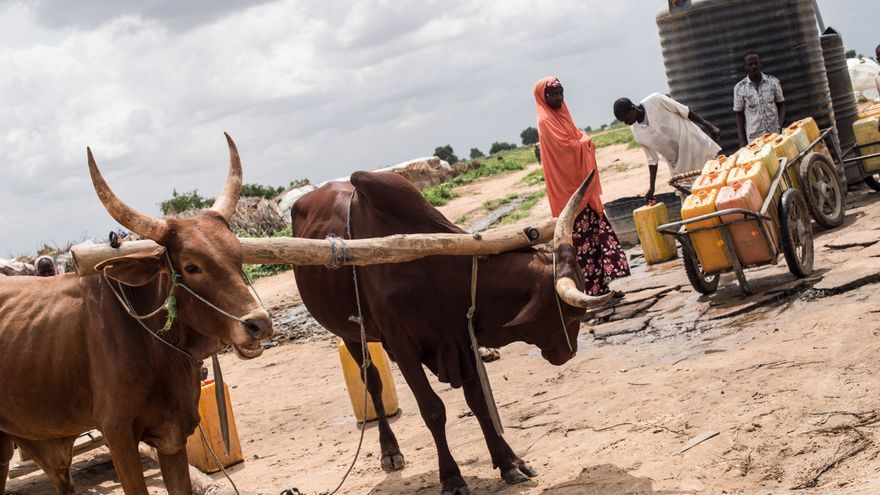 Las principales necesidades de la población en el noreste de Nigeria son la comida, la protección, la atención médica, el agua potable y el refugio. Pero además se trata de una población que ha sufrido durante años a causa de la violencia y el conflicto, y en muchos casos, no ha tenido más remedio que desplazarse para seguir con vida. Fotografía: Ikram N'gadi.