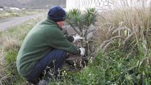Una ruta botánica para recuperar la vida en el barranco de La Aldea