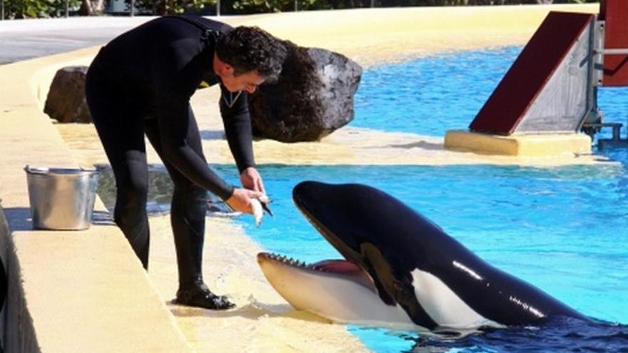 De la nueva orca #2