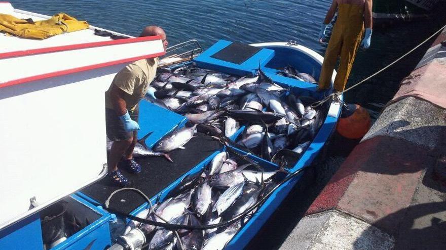 Pescadores desembarcan tuna en el puerto de Los Cristianos (Tenerife)