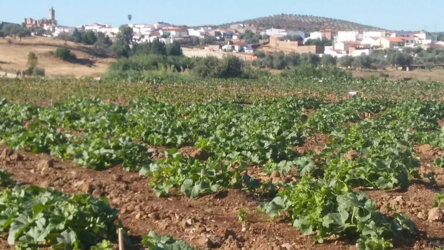 Valverde De Leganes Reconvierte Escombreras En Huertos