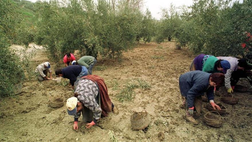 CE defiende a productores españoles de aceitunas tras investigación de EEUU