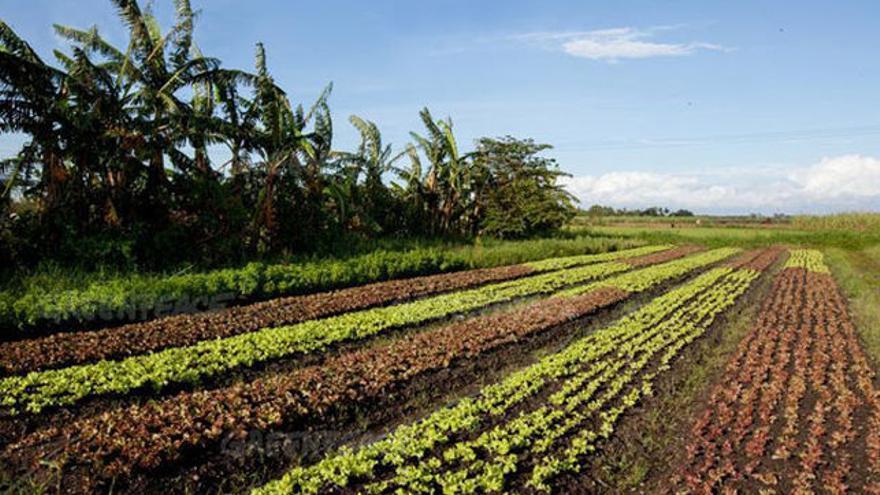 Se pondrá especial énfasis en promocionar la agricultura ecológica entre los agricultores