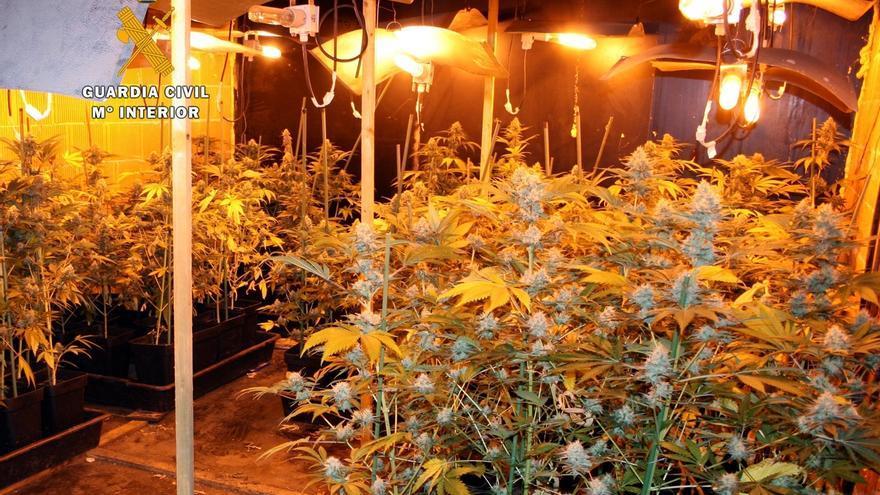 Intervenidas más de mil plantas de marihuana cultivadas 'indoor' en Rubalcaba