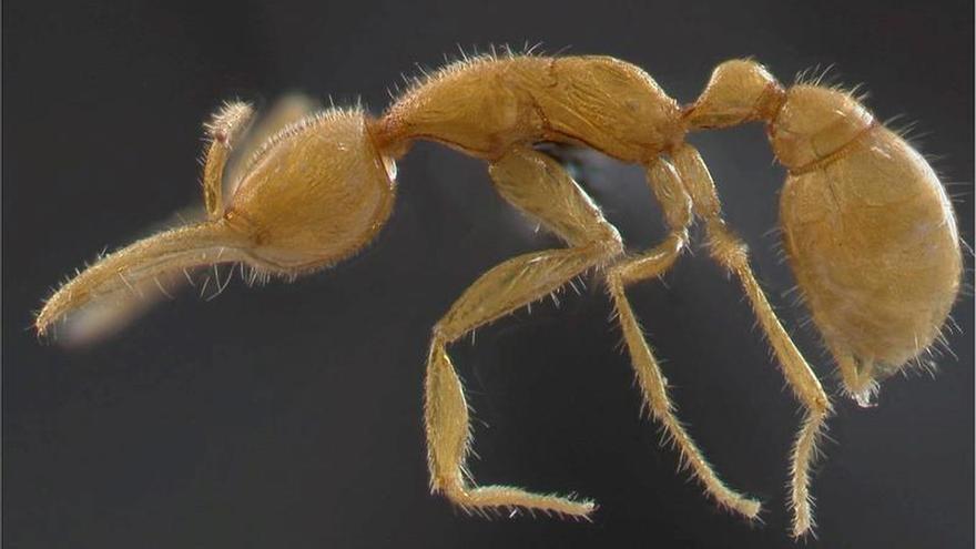 La revolución agrícola de las hormigas comenzó hace 30 millones de años