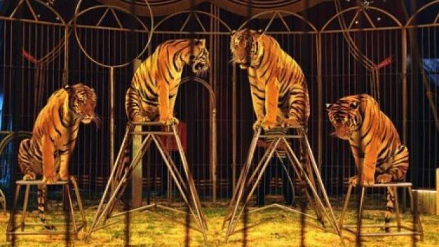Número circense con tigres. | PACMA