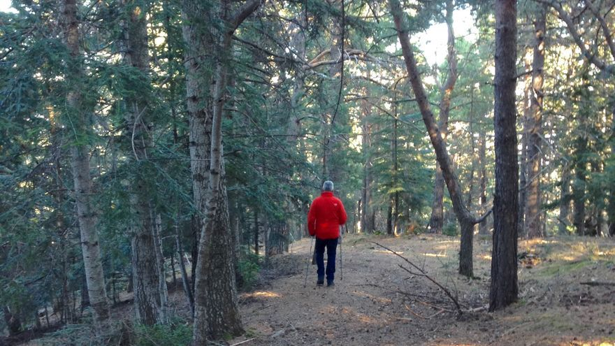 Baño de bosque en el Parque Natural del Cadí-Moixeró (Pirineo Catalán)