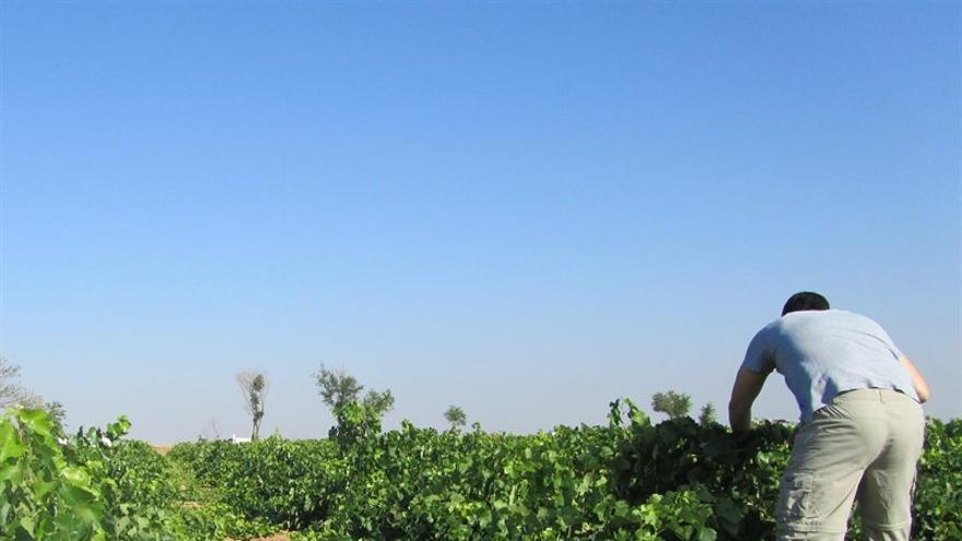 Los grupos parlamentarios de Aragón piden apoyo a la renta agrícola con pagos directos disociados de la producción