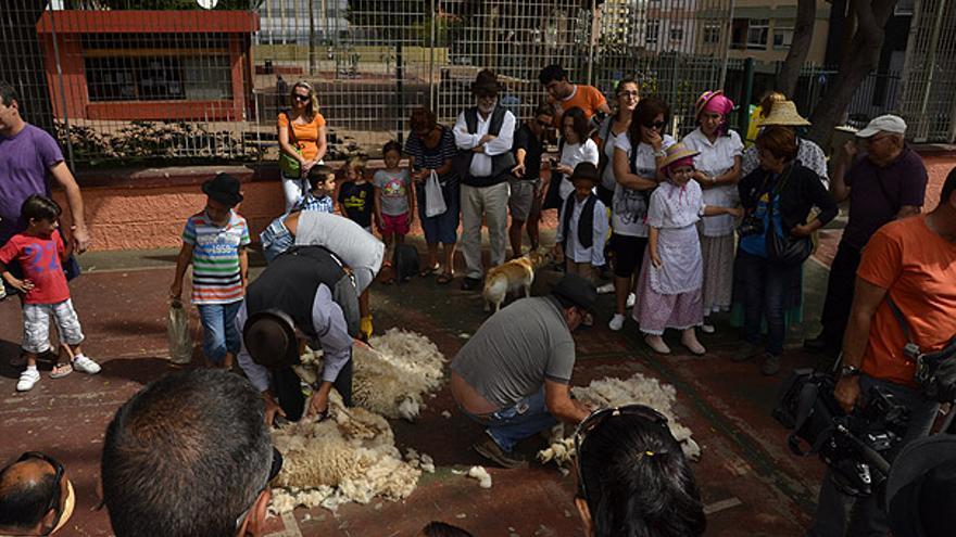 Del trasquilado de ovejas #9