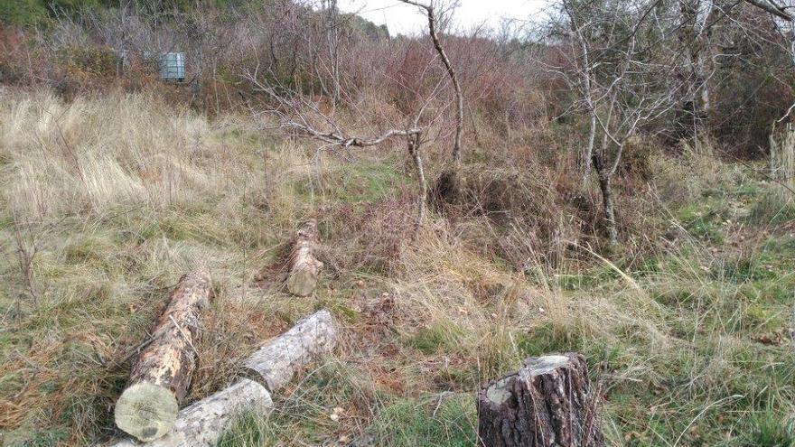 El caso Fraguas, ¿repoblación o invasión del espacio natural protegido?