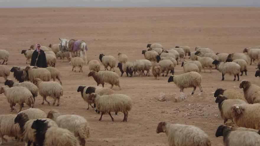 Diversos estudios señalan el cambio climático como razón de fondo de los conflictos armados en Siria a causa de las migraciones internas.