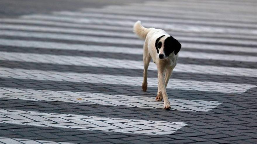 ERC retirará su apoyo a propuesta para poder cortar el rabo a perros de caza
