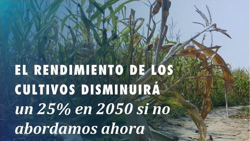 El rendimiento de los cultivos disminuirá