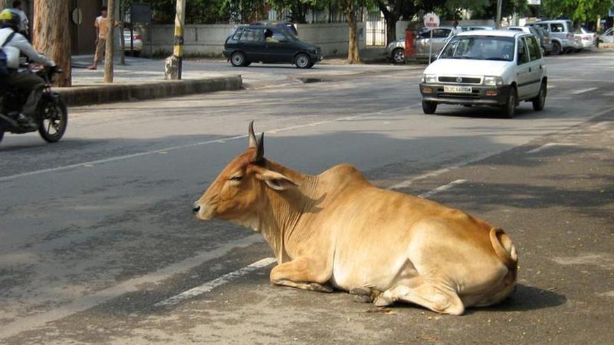 Un estado indio aprueba penas de cadena perpetua por matar vacas
