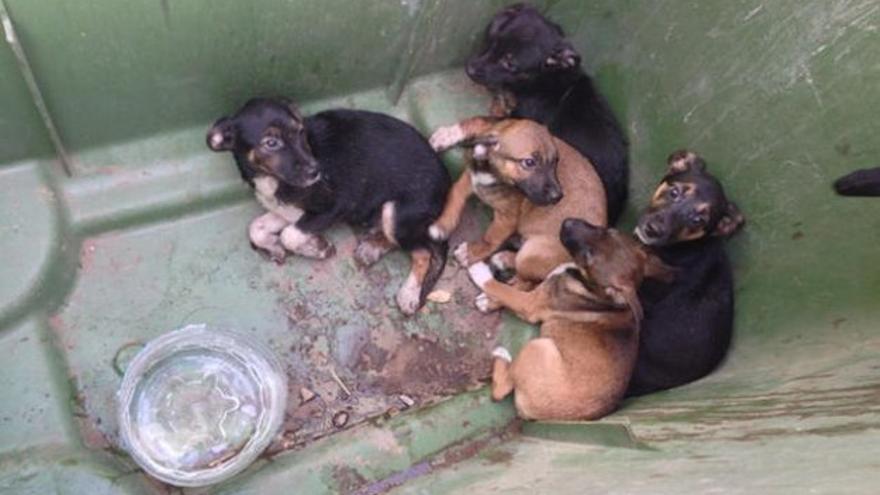 Cinco cachorros que habían sido arrojados a un estanque, rescatados por los Bomberos del Consorcio de Gran Canaria. Foto: La Provincia
