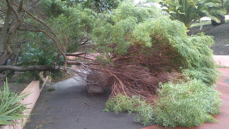 Un árbol caído encima del banco de una plaza.