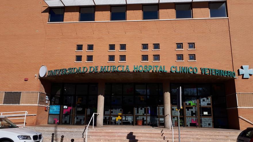 Hospital Veterinario de la Universidad de Murcia (UM)