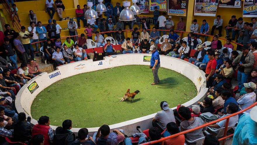 Peleas de gallos en Perú. Foto: Colectivo Britches