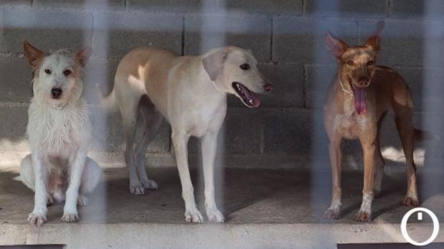 Perros vagabundos de la provincia: la Diputación os rescata