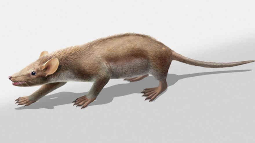 Reconstrucción del mamífero ancestral hallado en el yacimiento de Las Hoyas (Cuenca)