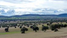 Campo de Montiel (Ciudad Real)