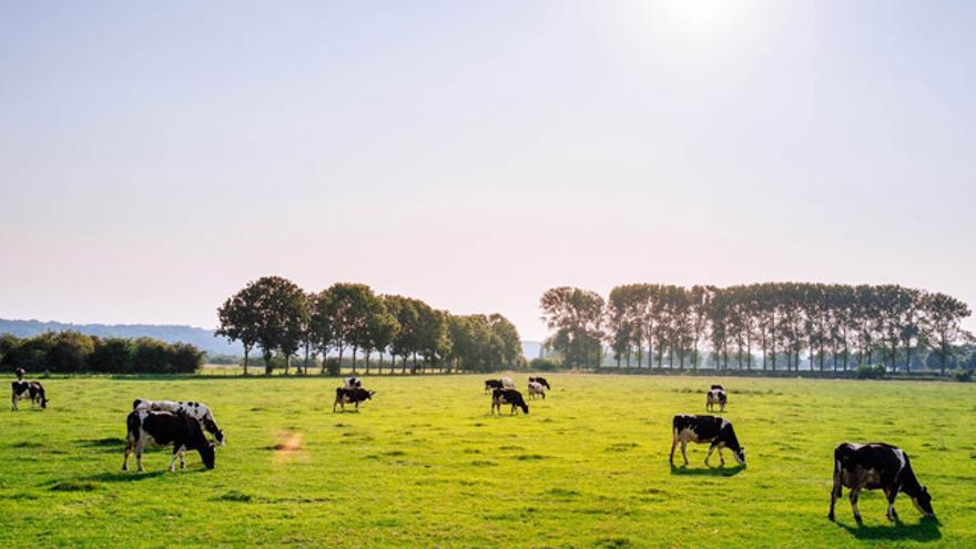 Las leches de bienestar animal y de pastoreo se hacen certificar por entidades privadas, no por organismos públicos.
