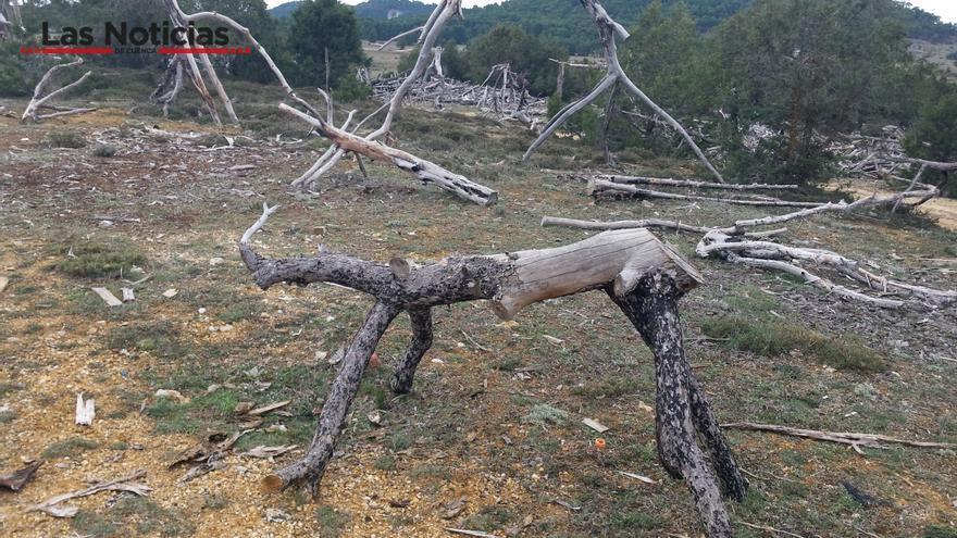 Reciclaje de troncos en Cuenca