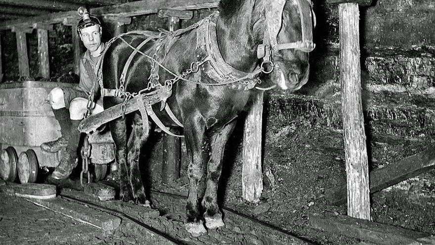 Un 'pit pony' trabajando en una mina inglesa.