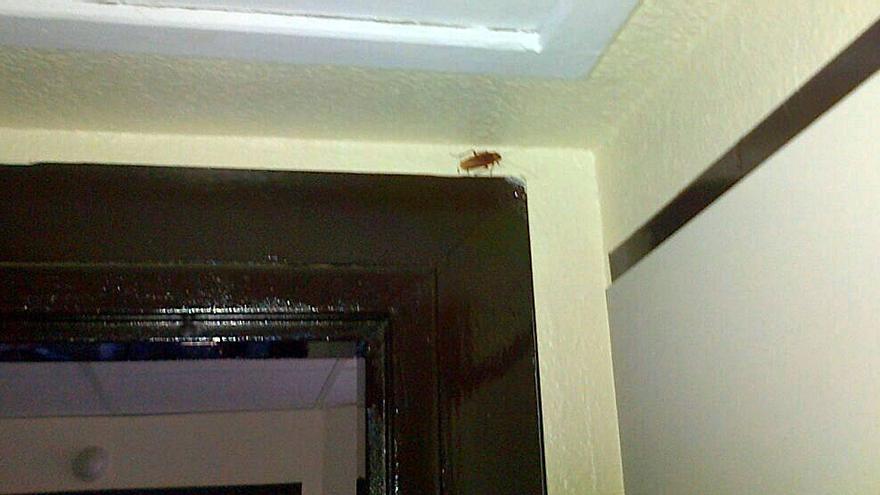 Cucaracha en el hospital de Puertollano