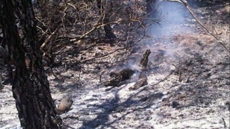 Incendio De Castellet I La Gornal
