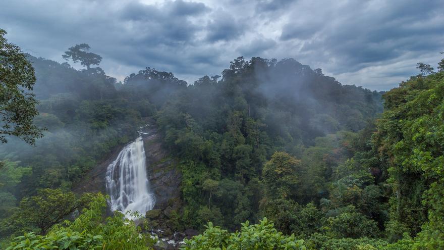 La selva lluviosa ocupa los lugares a los que a{un no ha llegado el té. Yogendra Joshi (CC)