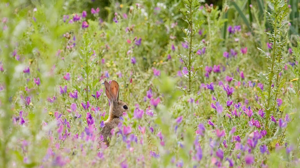 Un conejo.
