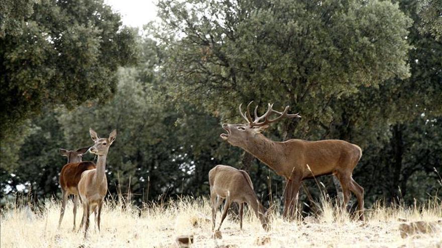 La berrea, una aventura que descubre la riqueza natural de Castilla-La Mancha