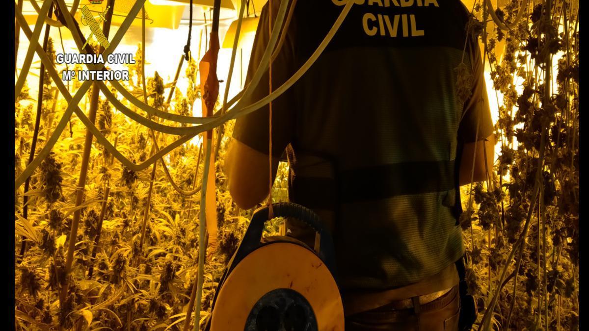 Un agente, en la plantación