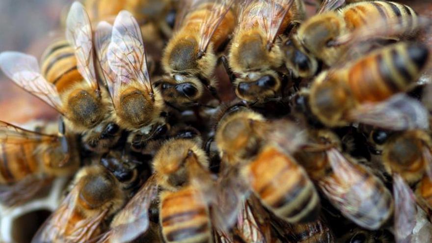 crisis alimentaria desaparición de abejas