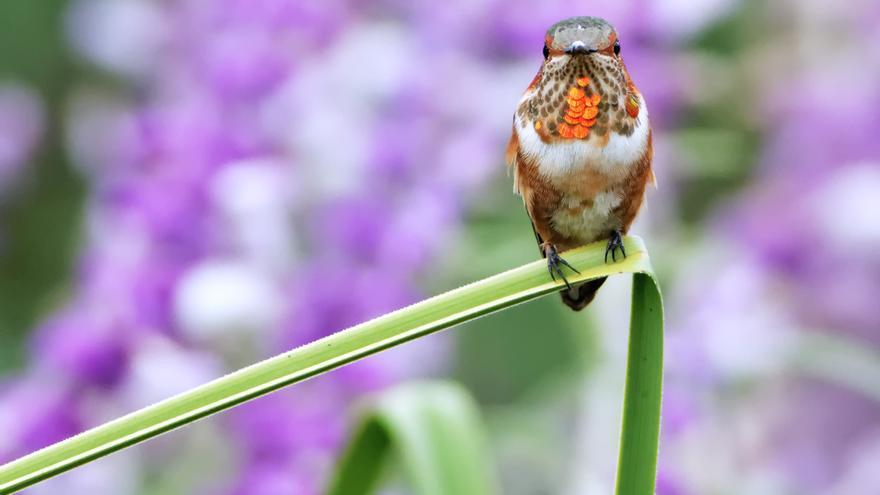 Hummingbird todavía tiene mucho de misterio