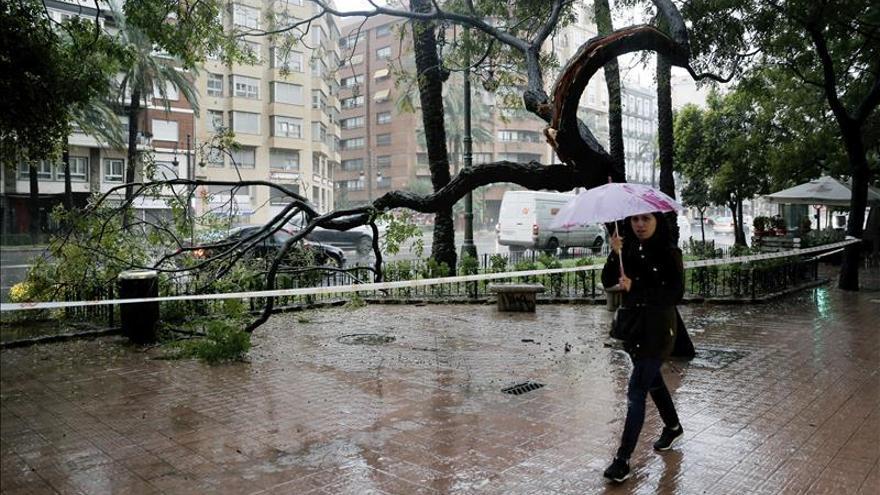 Lluvias de hasta 138 litros y fuertes vientos derriban árboles en Valencia