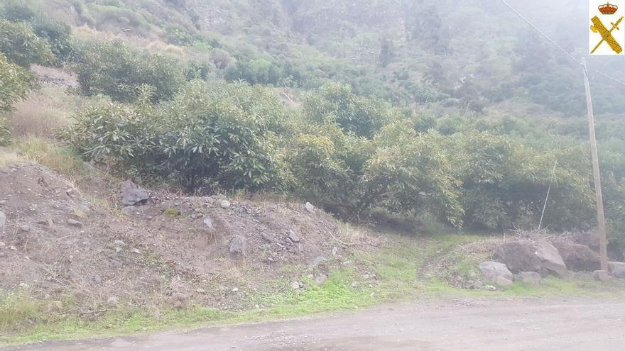 Finca de aguacates ubicada cerca La Caldera de Taburiente,