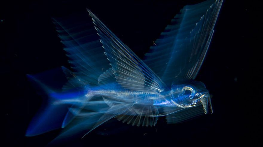 'Flying Fish in Motion' | Michael Patrick O'Neill