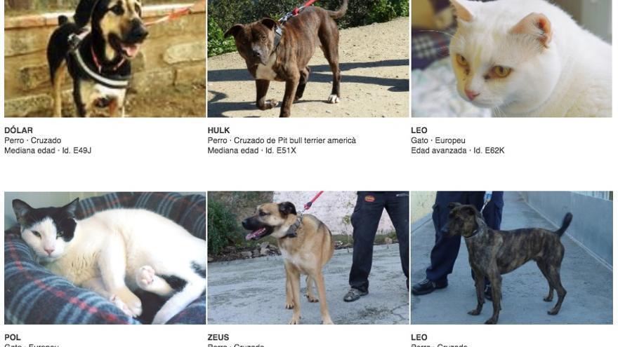 Buscador de animales en la web del CAAC