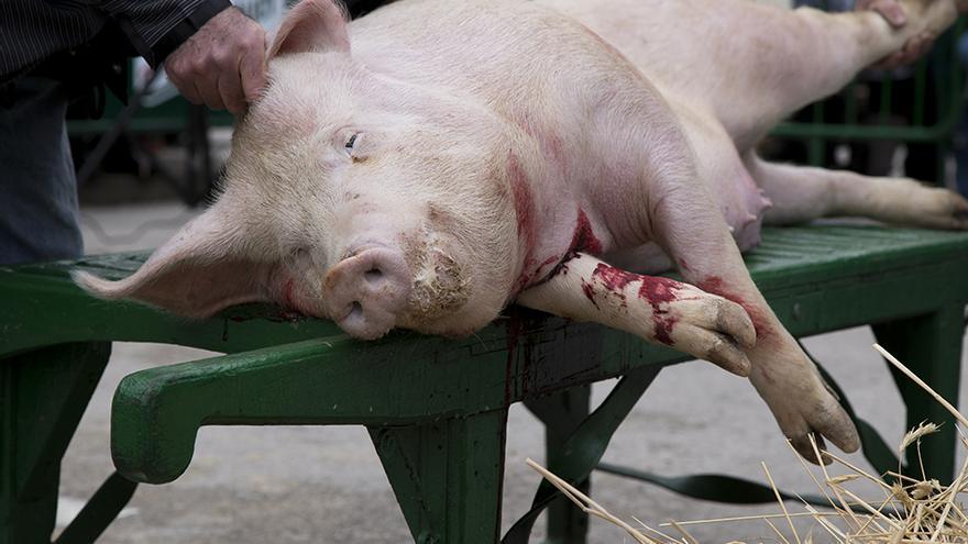 Matanza pública del cerdo en Burgo de Osma. Foto: Tras los Muros