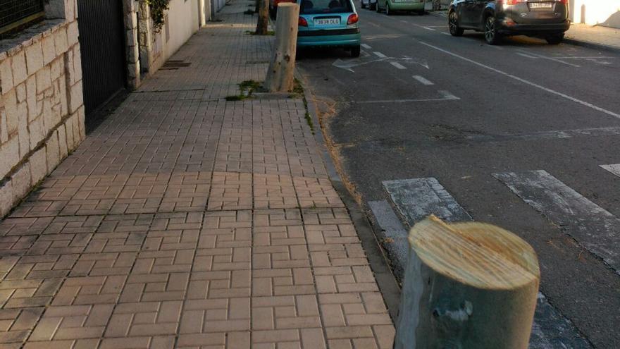 """Advierten que los árboles """"no son mobiliario urbano que se puedan quitar y cambiar como un banco o una papelera"""" / Foto: Cáceres Verde"""