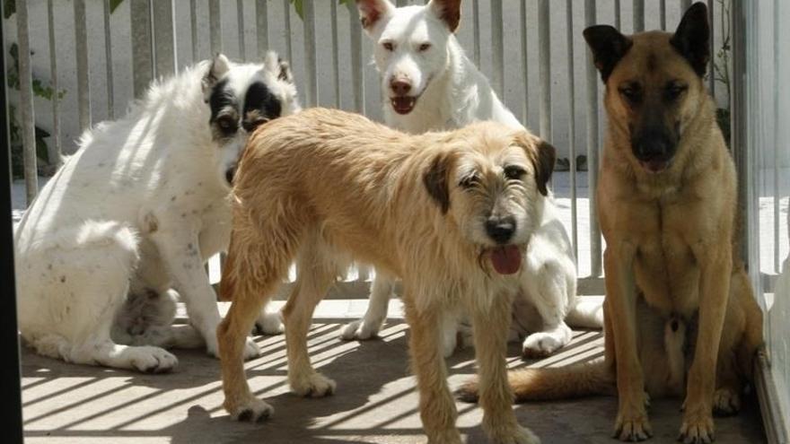 Animales en un refugio, en la isla de Tenerife